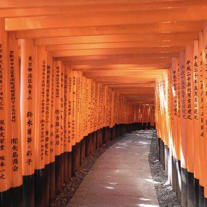 Torii von Fushimi Inari